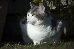 Eeuropean witte kat met groene ogen in de tuin Stock Afbeelding
