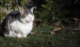 Eeuropean witte kat met groene ogen in de tuin Stock Foto's