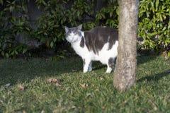 Eeuropean witte kat met groene ogen in de tuin Royalty-vrije Stock Foto's