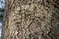 Eeuw eiken boomstam met diepe schorsgroeven en mos stock foto