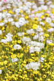 Eeuwige Wildflowers - Stock Foto's