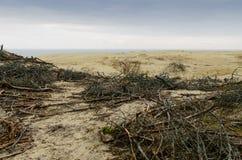 EFA van het zandduin Stock Foto
