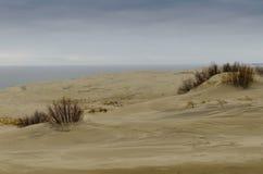 EFA van het zandduin Stock Afbeelding
