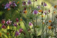 Efecto de Bokeh admitido el jardín durante una lluvia imagen de archivo libre de regalías