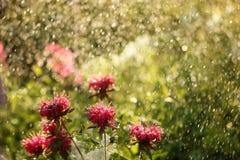 Efecto de Bokeh admitido el jardín durante una lluvia fotos de archivo libres de regalías