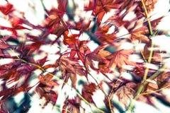 Efecto de la falta de definición de las hojas de otoño Imagenes de archivo