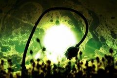 Efecto de la película Tallo doblado de la semilla de amapola Campo de la tarde de las cabezas de la amapola Foto de archivo