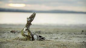 Efecto de la sequía II imagen de archivo libre de regalías