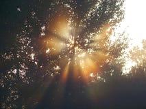 Efecto de Sun Imagen de archivo libre de regalías