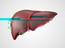 Efecto humano realista de la interferencia del hígado Fotos de archivo