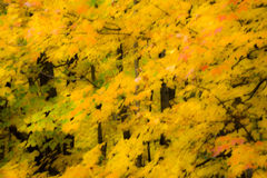 Efecto ideal del follaje de otoño Imagenes de archivo