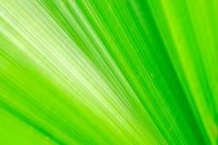 Efecto largo de la exposición de la hoja de palma verde de la fan sobre el movimiento borroso, extracto del backgroun del verdor foto de archivo libre de regalías