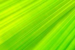 Efecto largo de la exposici?n de la hoja de palma verde de la fan sobre el movimiento borroso, extracto del backgroun del verdor fotos de archivo libres de regalías
