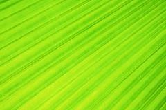 Efecto largo de la exposici?n de la hoja de palma verde de la fan sobre el movimiento borroso, extracto del backgroun del verdor fotos de archivo