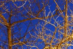 Efecto luminoso sobre ramas de árboles en la noche Imagen de archivo libre de regalías