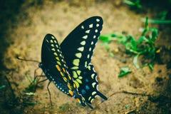 Efecto mariposa Foto de archivo libre de regalías