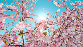efecto pintado 3D de la flor de cerezo Imágenes de archivo libres de regalías