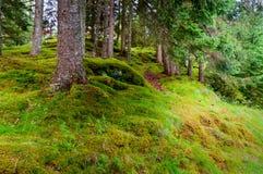 Efecto tranquilo de la escena del fondo del bosque Foto de archivo