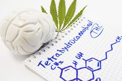 Efectos y acción del tetrahydrocannabinol THC en cerebro humano El modelo anatómico del cerebro es hoja cercana del inscri del cá Fotografía de archivo