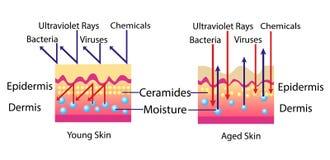 Efeito do ambiente na pele, diagrama do vetor para a ilustração cosmetological ilustração stock
