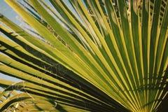 Efeito em folha de palmeira do vintage A luz solar cai completamente Fotos de Stock Royalty Free