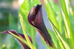 Efeito surreal da flor com folhas verdes imagem de stock royalty free