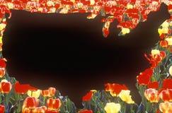 Efeitos especiais: Esboço do continente do Estados Unidos com tulipas Imagem de Stock