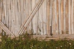 Efeu auf Bambus Stockfotos