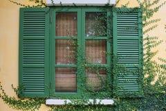 Efeu auf dem Fenster Lizenzfreie Stockfotos