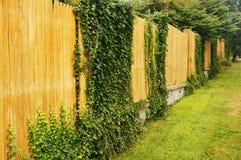 Efeu auf einem Zaun stockfoto