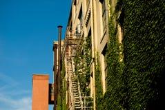 Efeu auf Gebäude Stockbilder