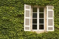 Efeu deckte Fenster ab Stockbild