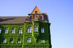 Efeu deckte historisches Gebäude über dem blauen Himmel ab lizenzfreie stockfotos