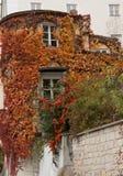 Efeu, der auf den Außenwänden eines runden Gebäudes in Passau, Deutschland wächst Stockfoto