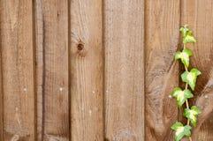 Efeu, der oben einen Zaun steigt Stockfoto