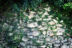 Efeu gegen Steinwand Stockbilder