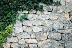 Efeu gegen Steinwand Stockfoto