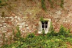 Efeu-gewachsene Backsteinmauer eines Altbaus mit einem kleinen Kellerfenster stockfoto