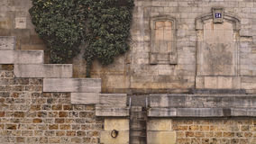 Efeu, Treppe, Dock Stockbild