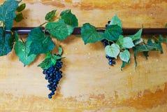 Efeu und Traubenrebe auf Wand Stockfotos