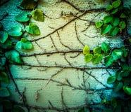 Efeu wächst auf der Wand heran Lizenzfreie Stockfotos