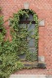 Efeublätter auf Ziegelsteinfenster Lizenzfreies Stockfoto