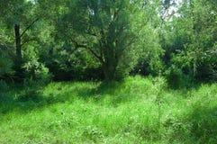 Effacement ensoleillé dans la forêt d'été photographie stock