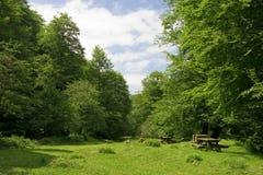 Effacer dans la forêt photos stock