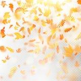 Effect van laag van de herfst de dalende bladeren met ondiep DOF onduidelijk beeld Het herfstmalplaatje van de gebladertedaling W royalty-vrije illustratie