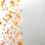 Effect van laag van de herfst de dalende bladeren met ondiep DOF onduidelijk beeld Het herfstmalplaatje van de gebladertedaling W stock illustratie