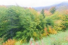 Effect of zooming in on fall foliage Royalty Free Stock Photos