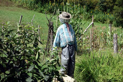 An effective scarecrow from pioneer days Royalty Free Stock Photo