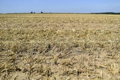 The effects of drought, dried field in the summer. royalty free stock photo