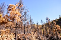Effects of the Fire in a Forest stock photos